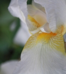 iris close up_3230
